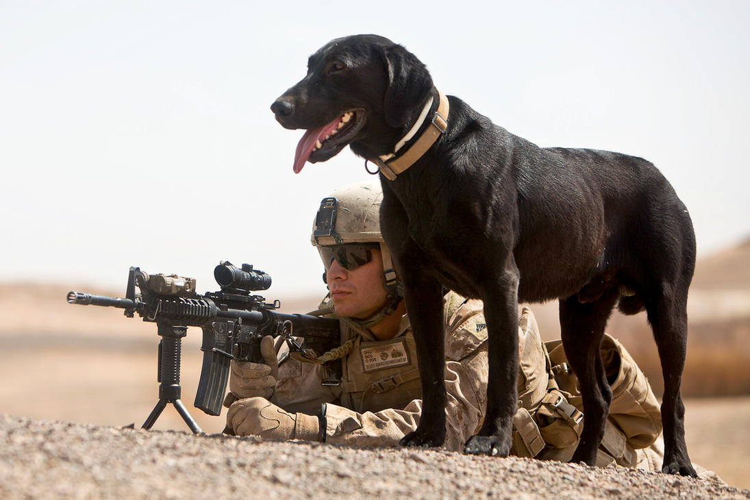Image Result For Pre Trained Dogs