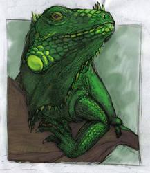 Iguana by Chiparoo