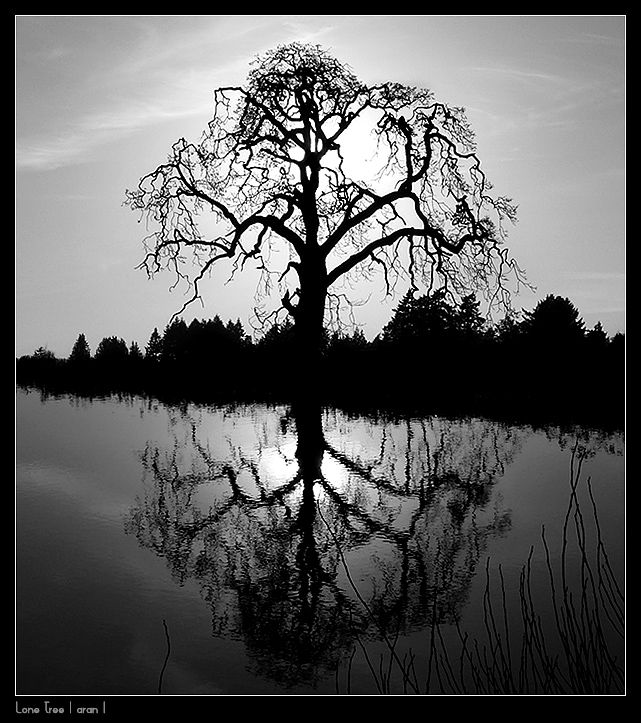 Lone Tree by studio7designs