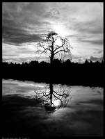 BW Lone tree II by studio7designs