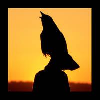 Crow Square by studio7designs