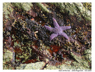 Stars of the Sea Number Four by Venire