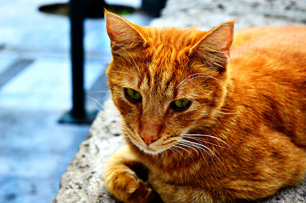 Cat Photography - Athens Greece by powertigervfx