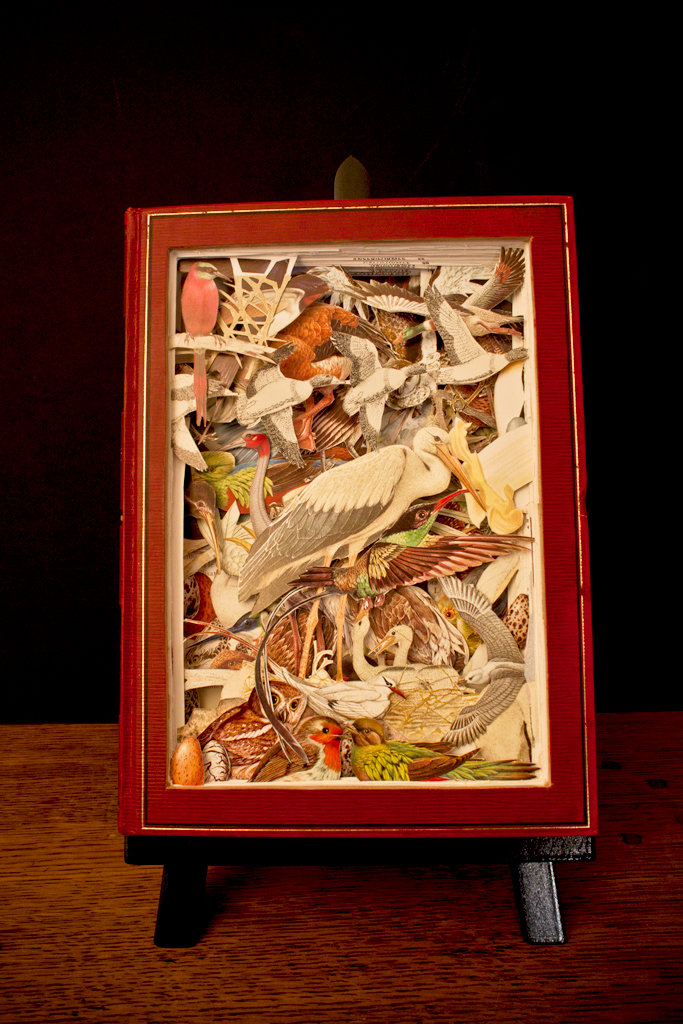 The birds encyclopedia by AnemyaPhotoCreations