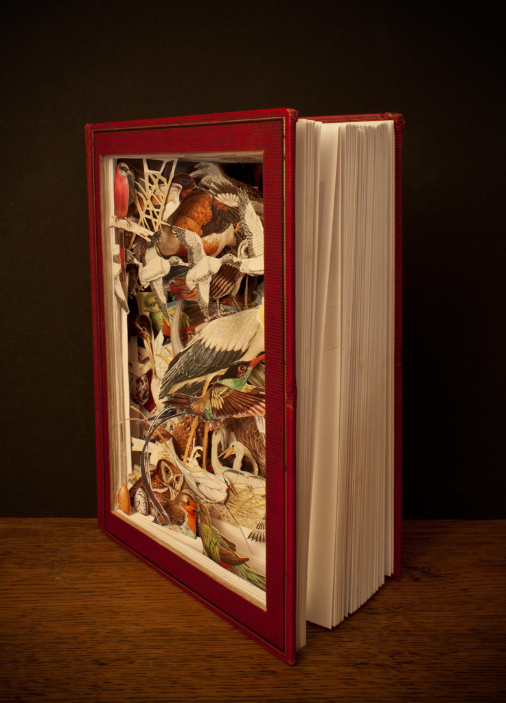 Birds Encyclopedia 2 by AnemyaPhotoCreations