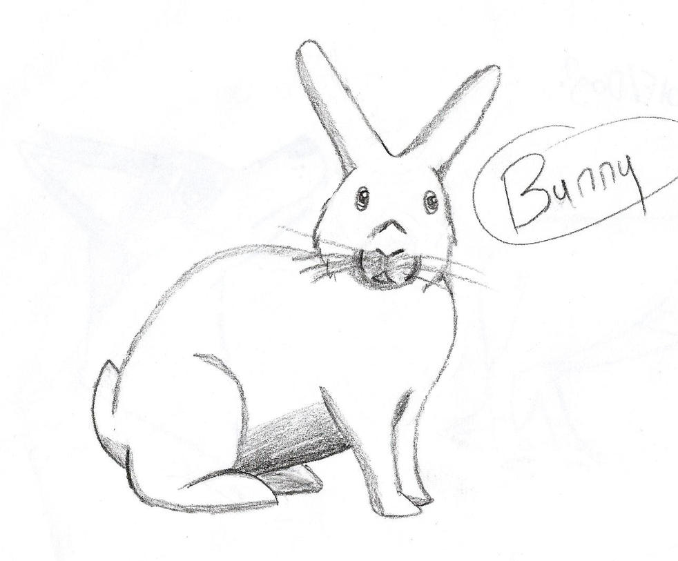 Bunny by thisistheonlyme