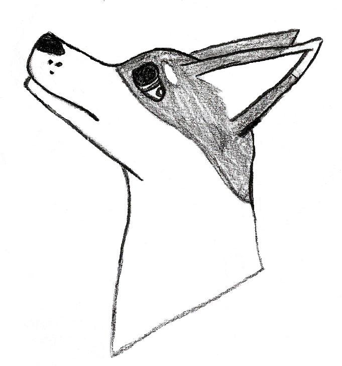 Dog by thisistheonlyme
