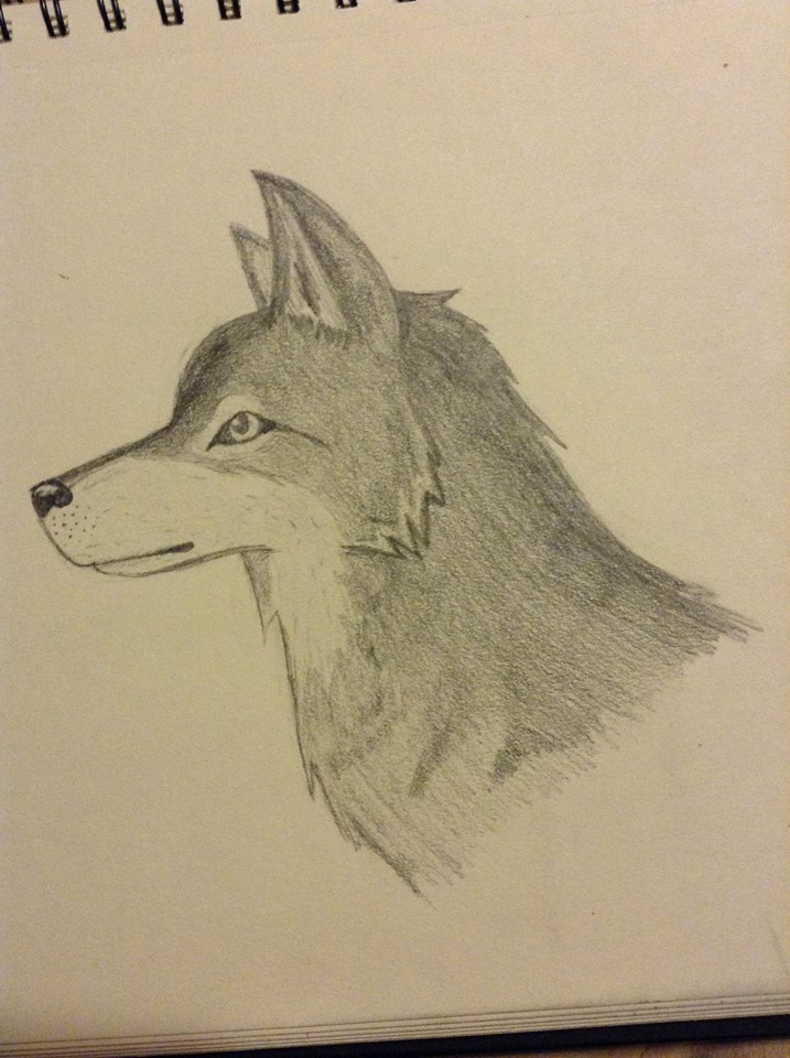 wolf by thisistheonlyme