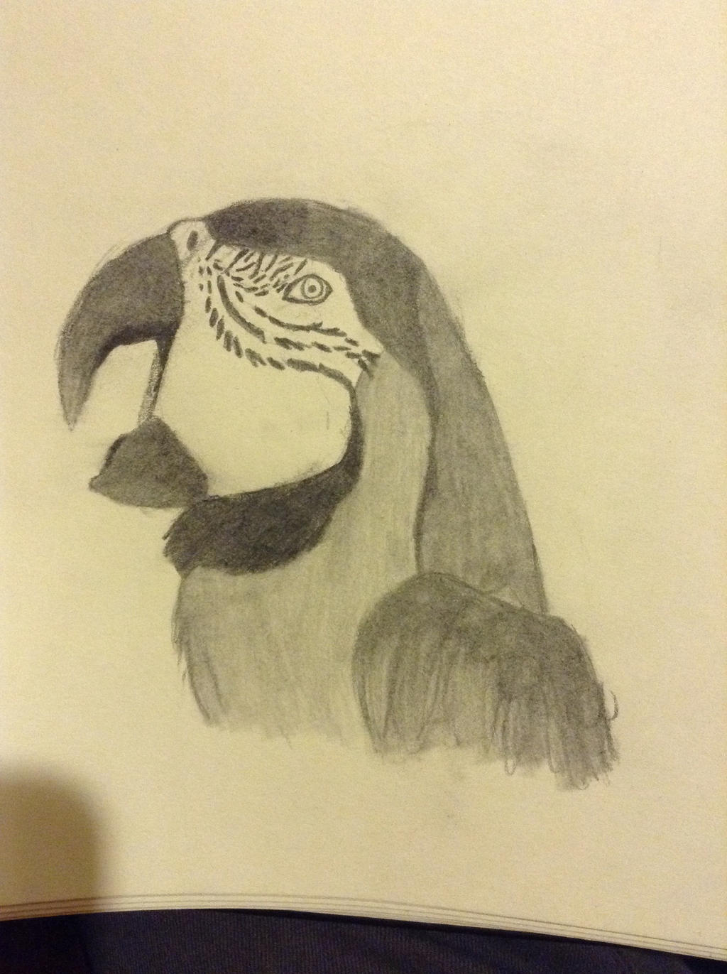 Parrot by thisistheonlyme