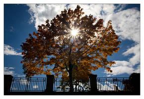 -- autumn -- by Torvon