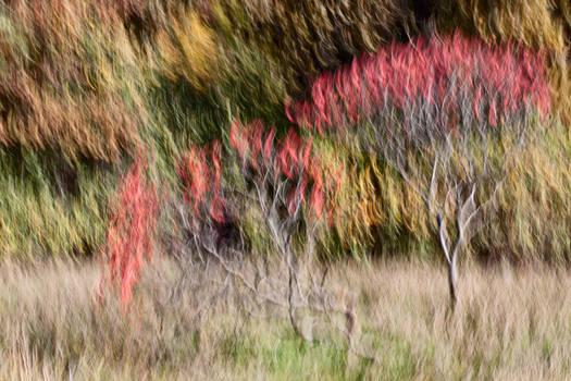 -- the burning bush --