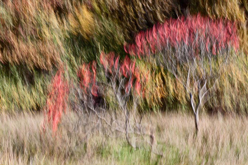 -- the burning bush -- by Torvon