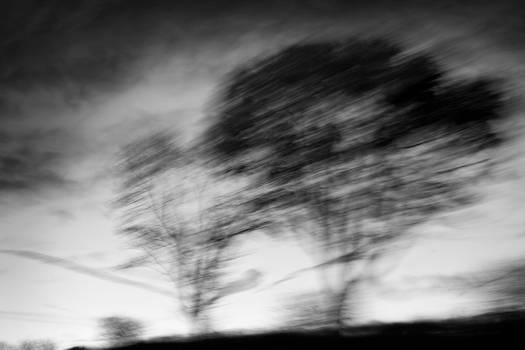 -- silent trees I --
