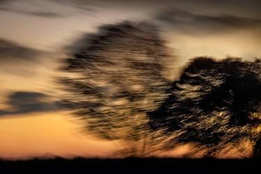 -- silent trees II -- by Torvon