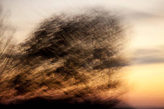 -- silent trees III --