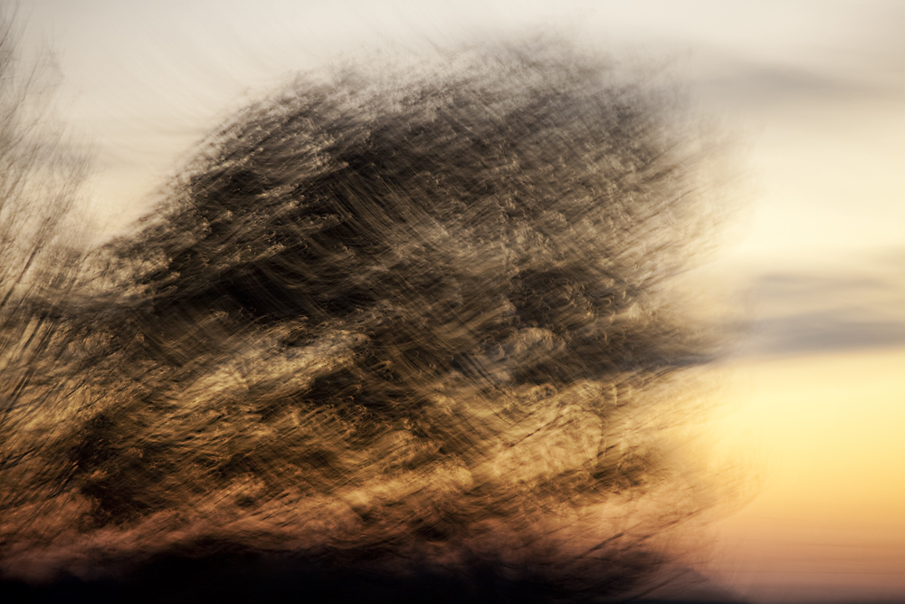 -- silent trees III -- by Torvon