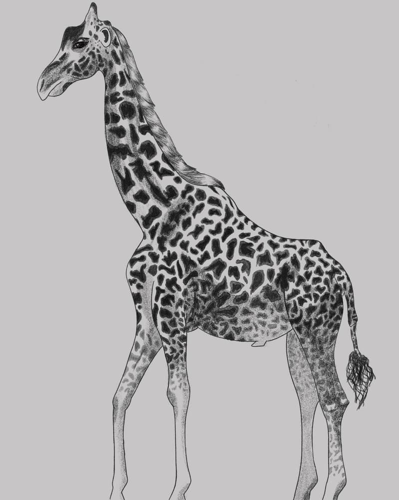 Giraffe - Pencil brush PS