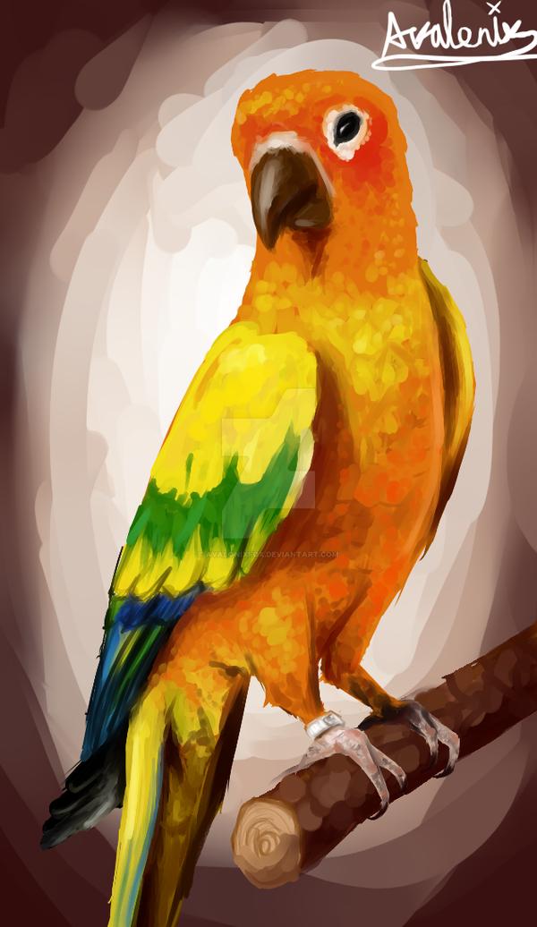 Maverick the parrot! + Speedpaint by AvalonixFox