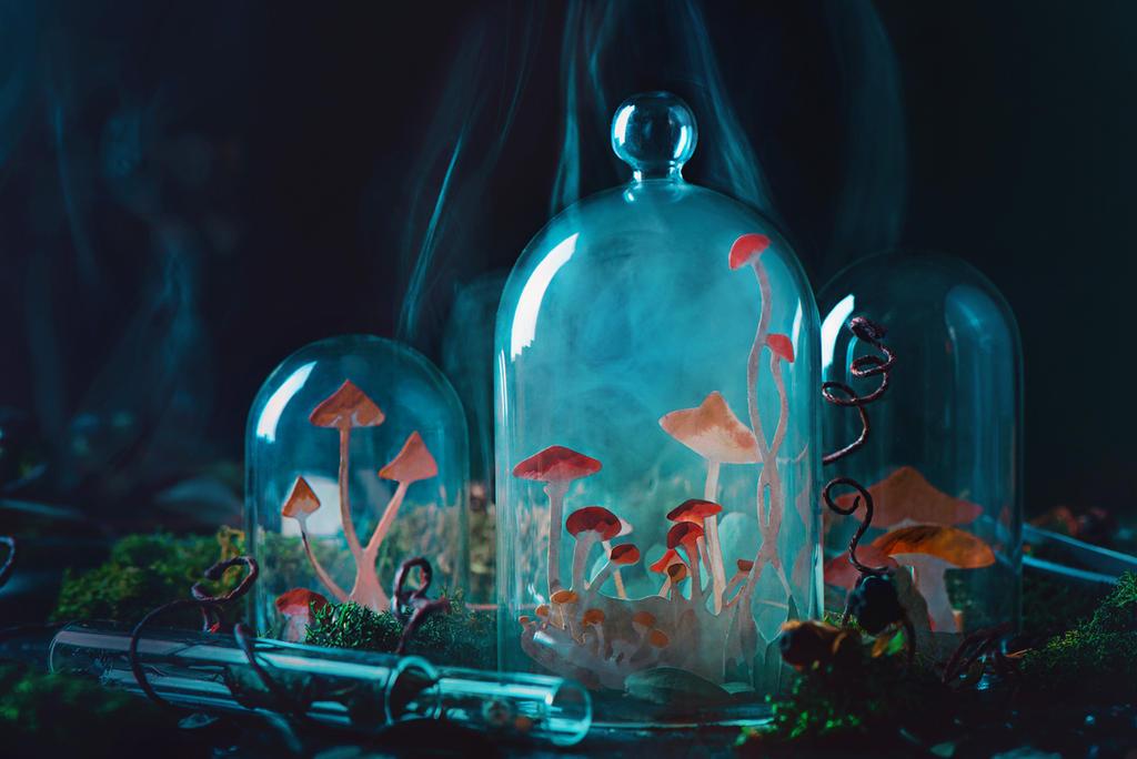 Growing mushrooms by dinabelenko