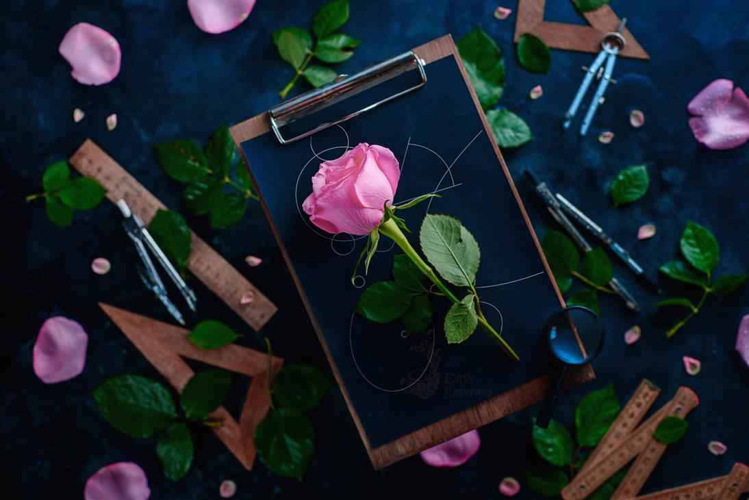 Rose Geometry by dinabelenko