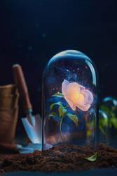 Precious Flower