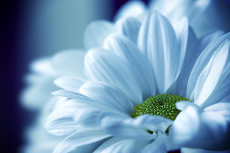 White Flower 02