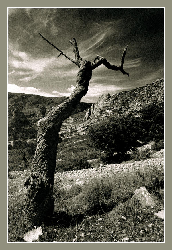 The Dead Almond Tree by lnmiller