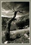The Dead Almond Tree by lnmiller