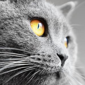 eskikitapci's Profile Picture