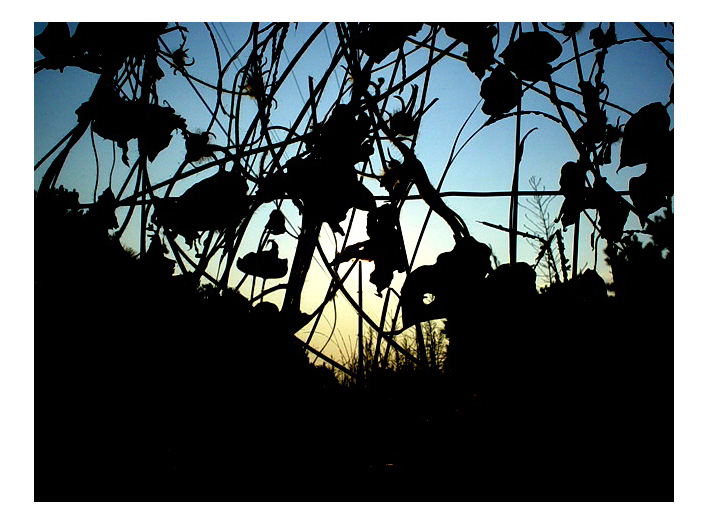 Entangled Silhouette by swimboy5002