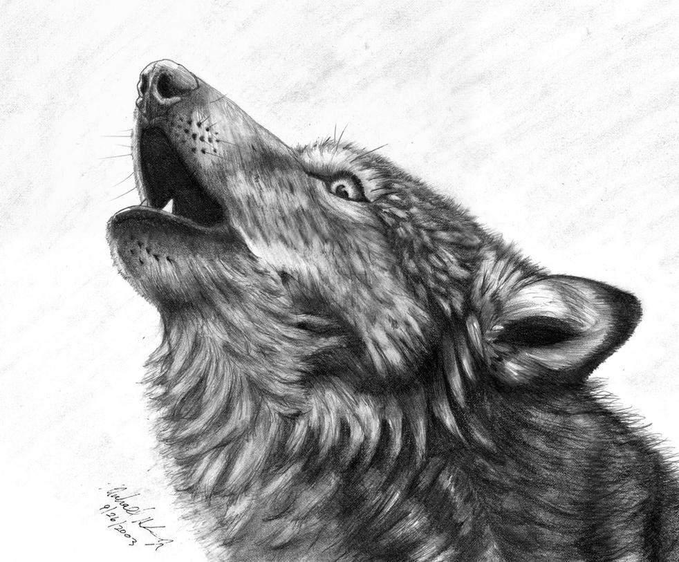 Gray Wolf Howling Drawing Wolf Howl by Mi...
