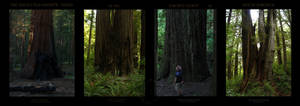 Summer 09-Pacific Old Growth I