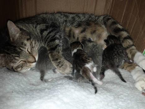 Mamma Kitty and family