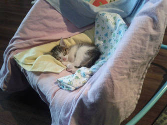 Sleepy Kitty by skookyspry