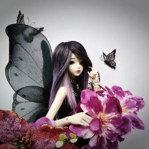 Reverie the black butterfly