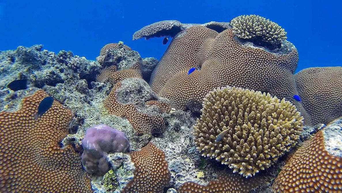 Coral Reef by ozplasmic