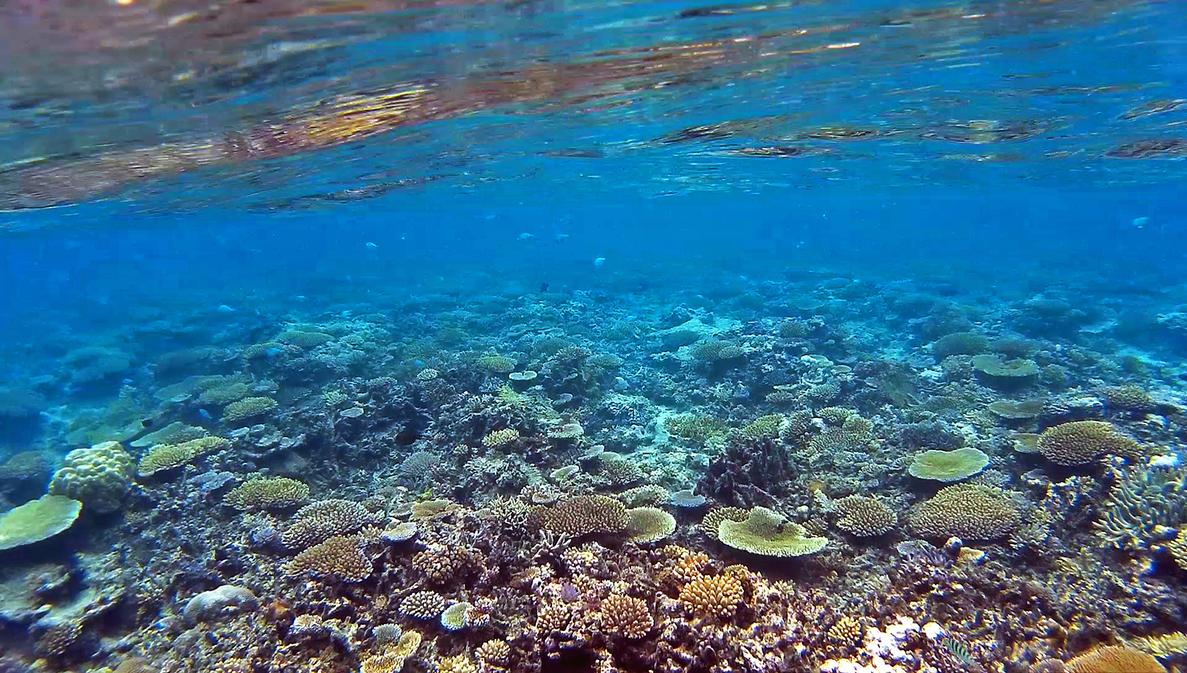 On the reef by ozplasmic