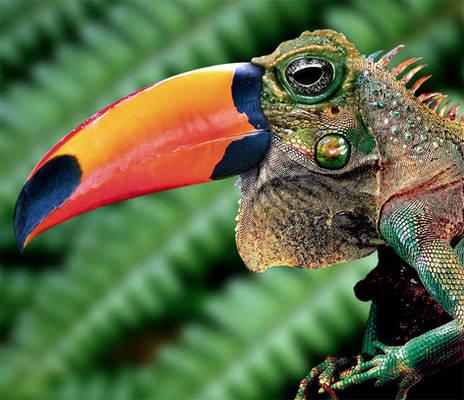 Toadcan-iguana