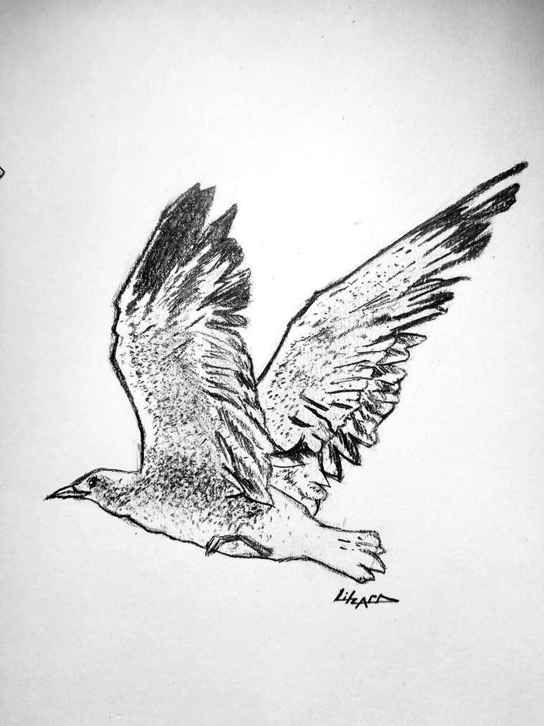 Seagull #2 by litzard