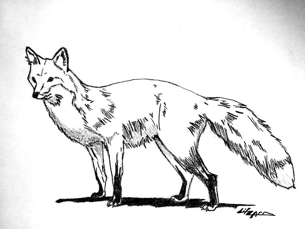 Fox #4 by litzard