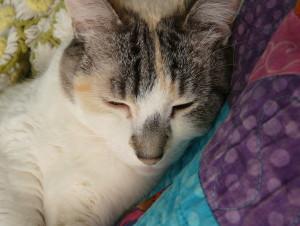 Kagurou's Profile Picture