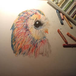 Colorful owl by natalia-m-art