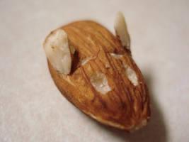 Almond Mouse by Rakkety
