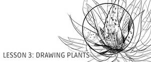 Lesson 3: Drawing Plants