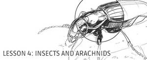 Lesson 4: Drawing Insects and Arachnids by irshadkarim