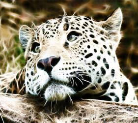Fractalius baby leopard