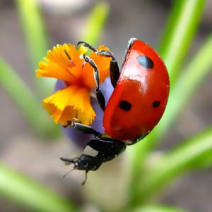 Ladybug 3 by butenkof