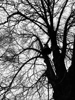 Tolling in the Trees by Died-and-Died
