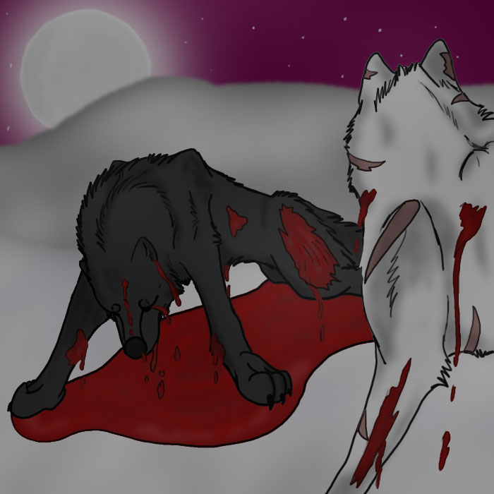 black and white wolves fightingFighting Wolf Drawings