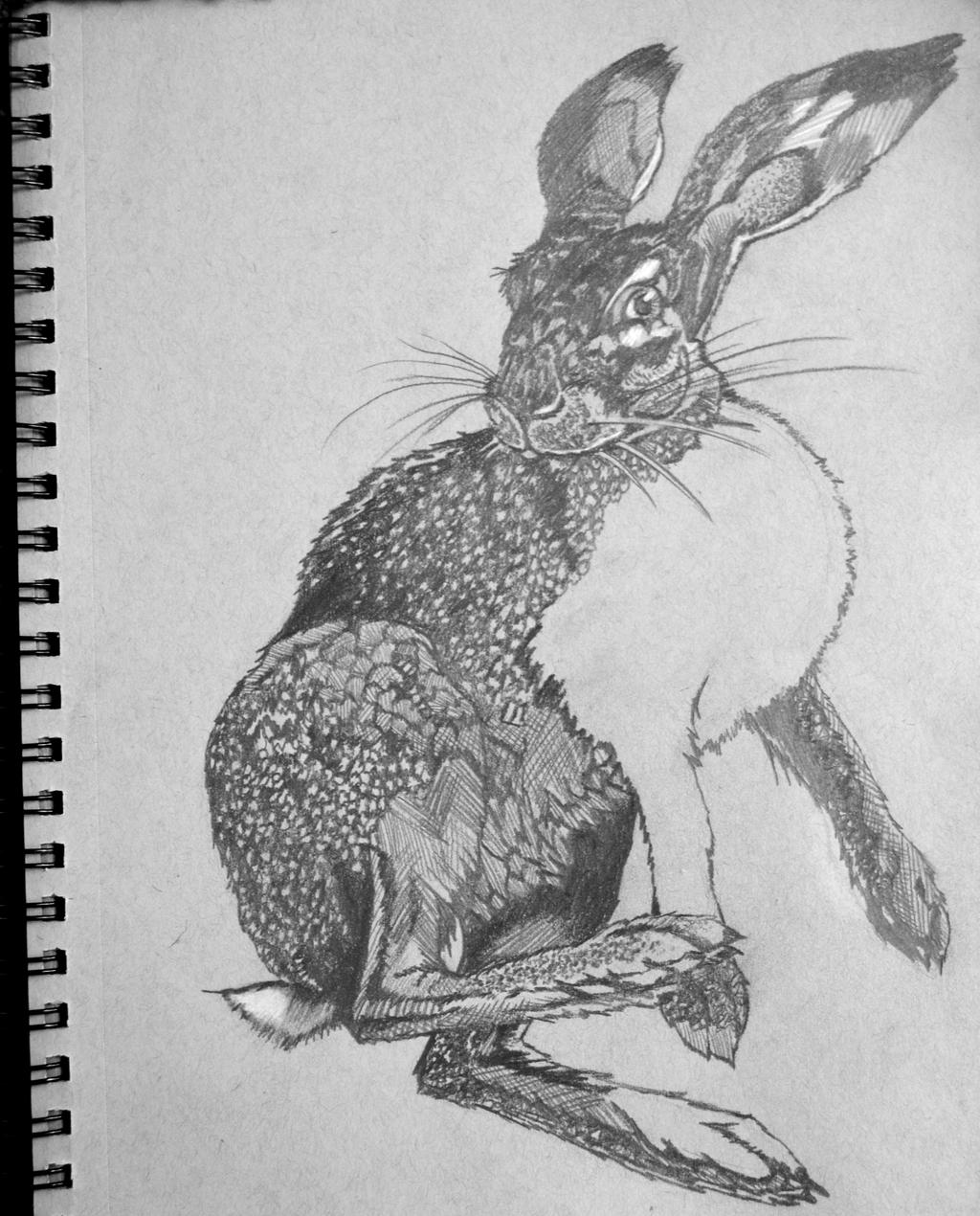Behind Portrait Curtain further Cat Eyes 269484507 additionally Wip Graphite Drawing Rabbit 438288383 likewise Review Art Academy Home Studio The World Is Your Canvas as well The Basics Of Sketching With Charcoal Cms 23690. on kneaded eraser meaning